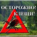 О заболеваемости клещевым инфекциями на 30.06.2015